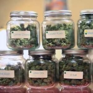 Marijuana cannabis in jars.
