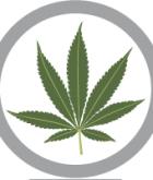 Marijuana Politics Staff