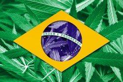 Brazil Flag ove cannabis