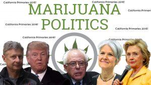 california primaries 2016 candidates marijuana positions