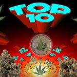 top 10 marijuana strains of 2016
