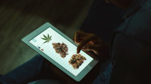 marijuana and technology