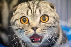 Omaha Cat