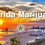 florida amendment 2 marijuana
