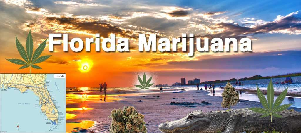 florida amendment 2 marijuana
