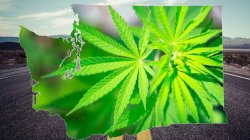 Legal Limits for Marijuana in Washington