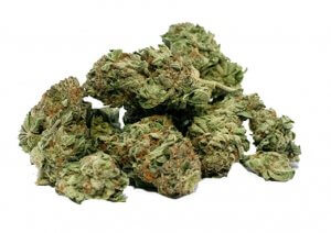 bud-support-medical-marijuana