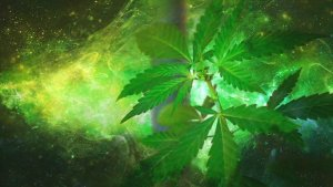 Cosmic Cannabis
