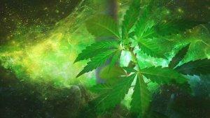 Cosmic Cannabis