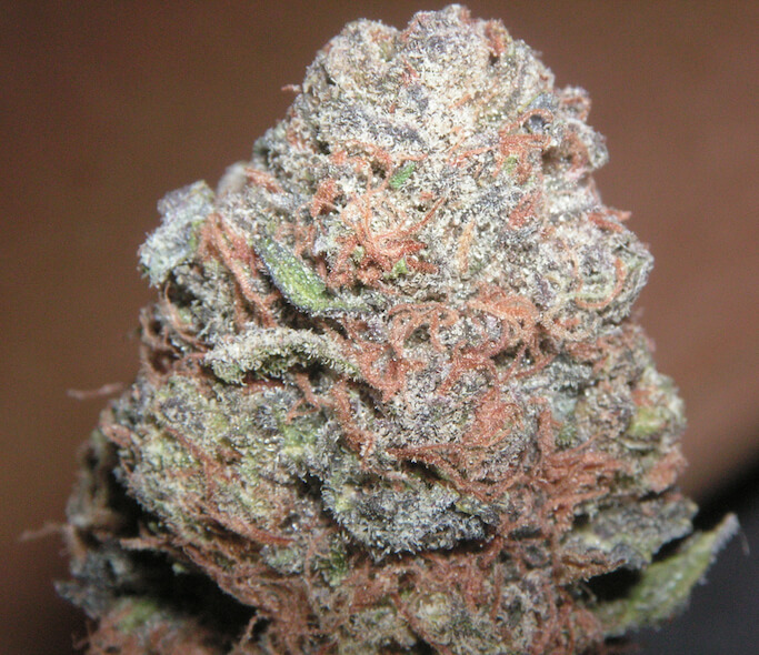 Purple Kush marijuana bud