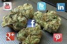 weed-social media